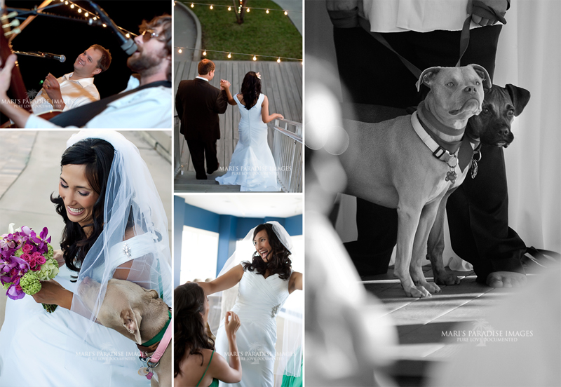 Dogs in weddings photograpy